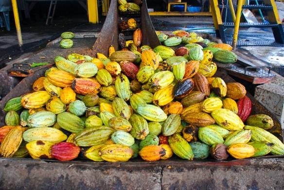 cacao pods bulk